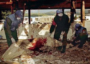 UNIFIL Peacekeepers (Qana 1996) Remove Artillery Attack Victim Remains